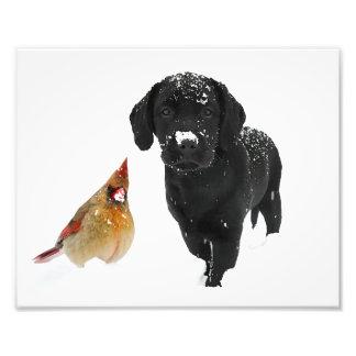 Black Labrador - Snow Day Companions Photo Print