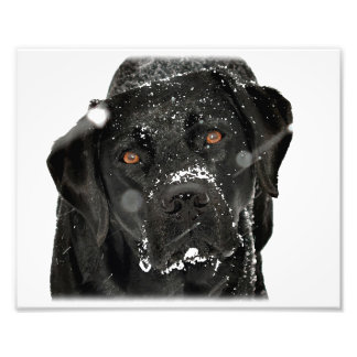 Black Labrador - Snow Globe Photo Print