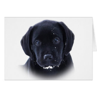 Black Labrador - Snow Puppy Card