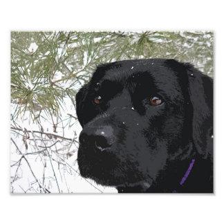 Black Labrador - Sparkling Pines Photo Print