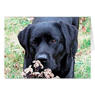 Black Labrador - Take Time Card