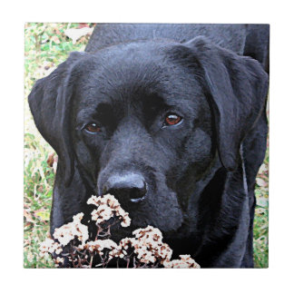 Black Labrador - Take Time Tile