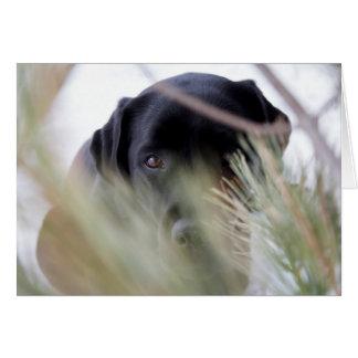 Black Labrador - Thru the Trees Card