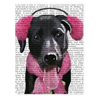 Black Labrador With Ear Muffs Postcard