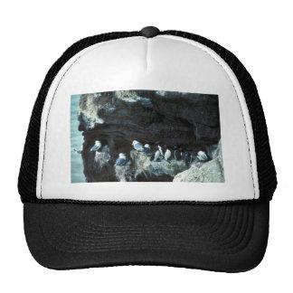 Black-legged kittiwakes and murres trucker hat