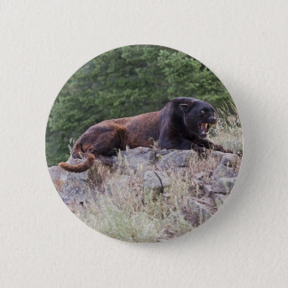 Black Leopard Button