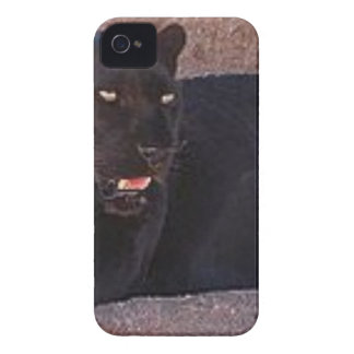 Black Leopard iPhone 4 Cases