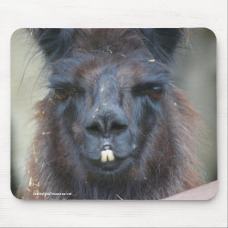 Black Llama Animal Nature Photo Mousepad
