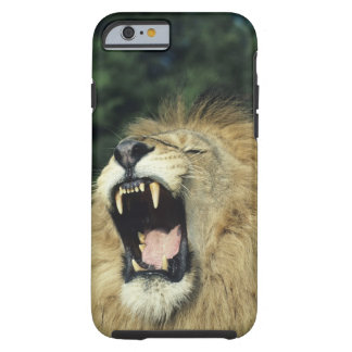 Black-maned male African lion yawning, headshot, Tough iPhone 6 Case