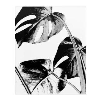 Black monstera leaves tropical summer foliage acrylic print