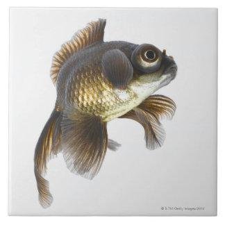 Black moor goldfish (Carassius auratus) 2 Tile