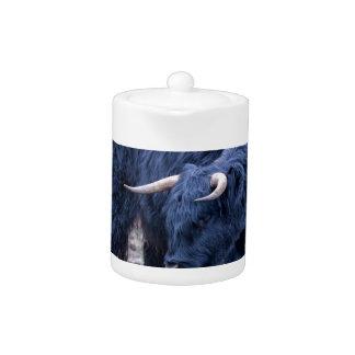 Black mother scottish highlander cow