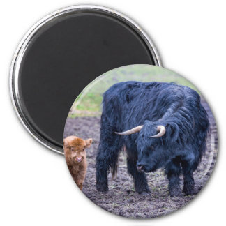 Black mother scottish highlander cow magnet