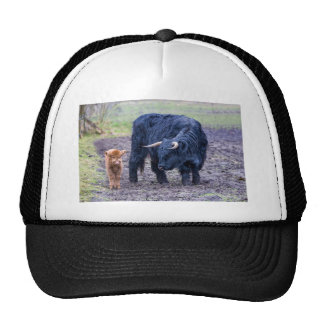 Black mother scottish highlander cow trucker hat
