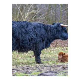 Black mother scottish highlander cow with calf custom letterhead