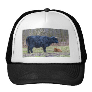 Black mother scottish highlander cow with calf trucker hat
