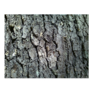 Black Oak Tree Bark Postcard