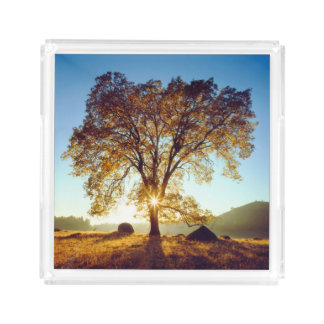 Black Oak Trees | Cleveland National Forest, CA Acrylic Tray