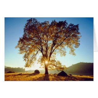 Black Oak Trees | Cleveland National Forest, CA Card
