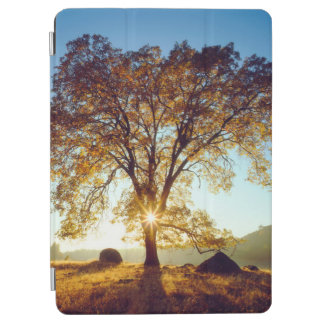 Black Oak Trees   Cleveland National Forest, CA iPad Air Cover