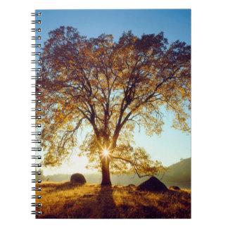 Black Oak Trees | Cleveland National Forest, CA Notebook