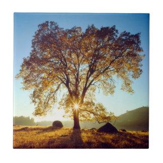 Black Oak Trees | Cleveland National Forest, CA Tile