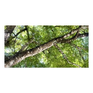 BLack Olive Tree Canopy Photo Card