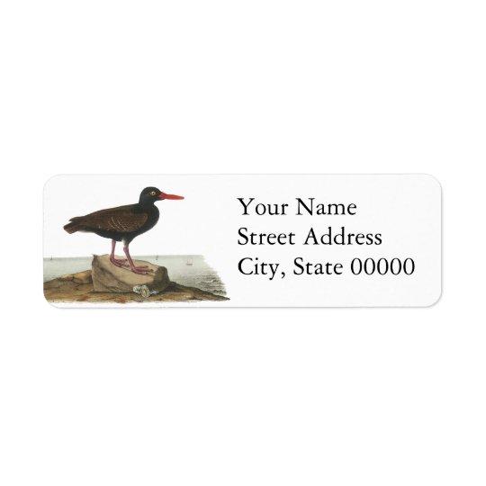 Black Oystercatcher, John Audubon