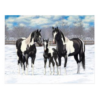 Black Paint Horses In Snow Postcard