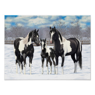 Black Paint Horses In Snow Poster