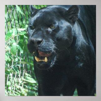 Black Panther Cat Poster