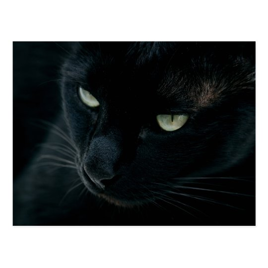 Black panther - Postcard