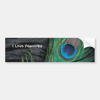 Black Peacock Feather Bumper Sticker