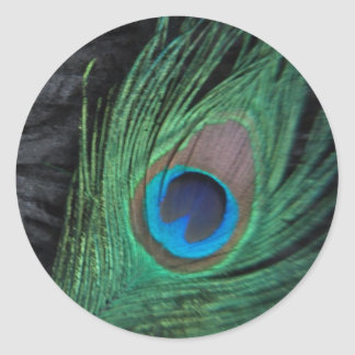Black Peacock Feather Still Life Sticker