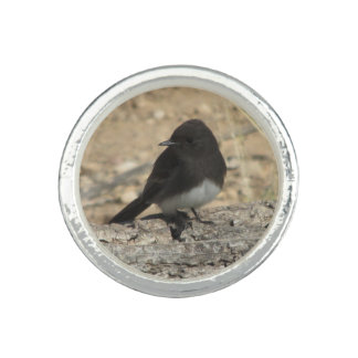 Black Phoebe Ring