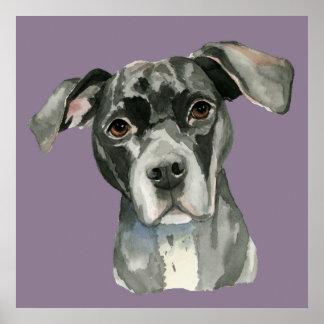 Black Pit Bull Dog Watercolor Portrait Poster