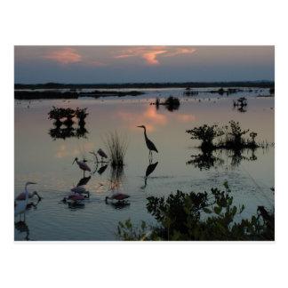 Black Point Egret Postcards