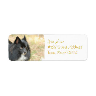 Black Pomeranian Mailing Labels