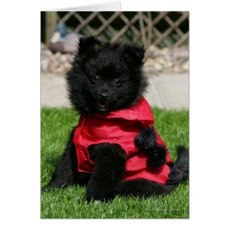 Black Pomeranian Puppy Looking at Camera Greeting Card