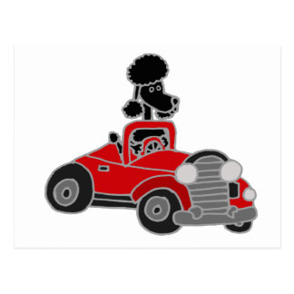 Black Poodle Driving Red Convertible Car Postcard