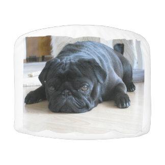 black pug flat pouf