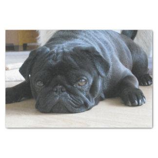 black pug flat tissue paper