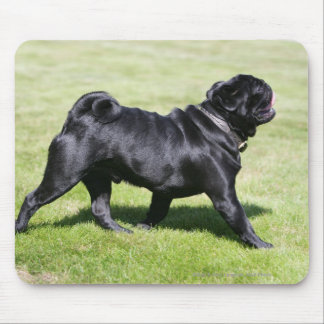 Black Pug Panting While Walking Mouse Pad
