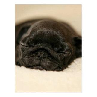 Black Pug Puppy Sleeping Postcard