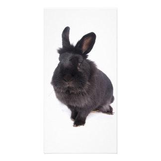 black rabbit photo greeting card