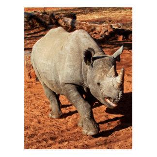Black Rhino Portrait Postcard