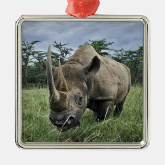 Black Rhinoceros, Diceros bicornis, Kenya Silver-Colored Square Ornament
