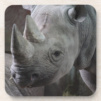 Black Rhinoceros Photo Beverage Coaster