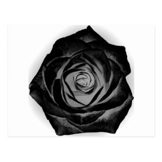 Black Rose 20171027 Postcard