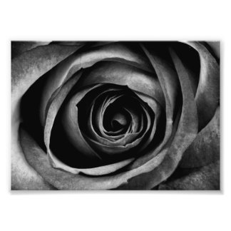 Black Rose Flower Floral Decorative Vintage Photo